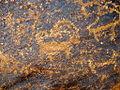 Petroglyphes Stakna.jpg
