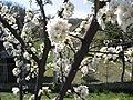 Piante fiorite - panoramio - Emanuela Meme Giudic….jpg
