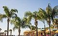Pine Island Beach, Hernando County, Florida - panoramio (6).jpg