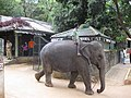 Pinnnawale Elephant Orphanage (7568424554).jpg