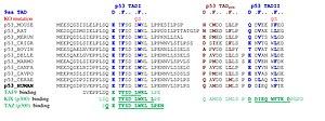 TP53 - Image: Piskacek p 53b
