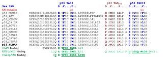P53 - Image: Piskacek p 53b