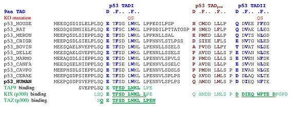 Piskacek p53b.jpg
