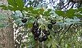 Plant (13982830549).jpg