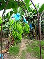 Plantacion.jpg