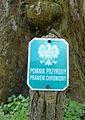 Platanus hispanica, Poznan, Dendrological Garden (3).JPG