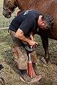 Plougoulm - Gouel an Eost 2011 - Remplacement du fer d'un cheval étape 014.jpg
