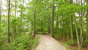 Poquoson, Virginia - View from the Poquoson, Virginia Museum's marsh path.