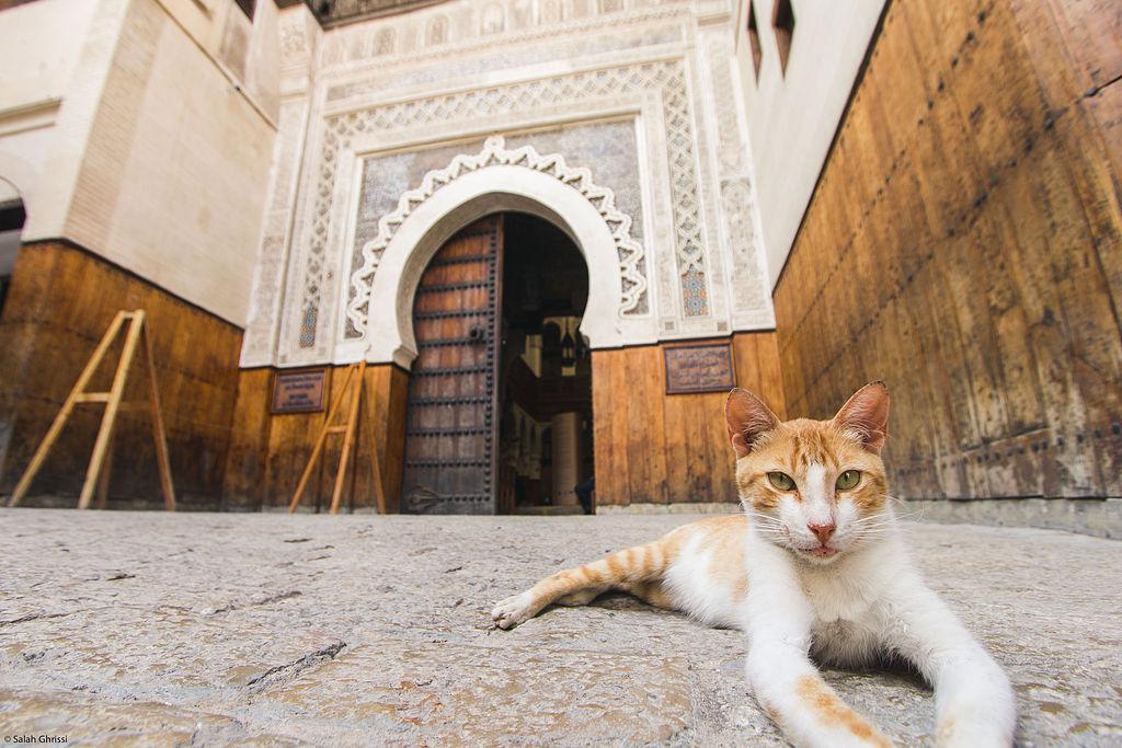 Chat au repos devant la porte du Musée Nejjarîn des Arts et Métiers du bois à fès - Photo de Salah Ghrissi