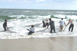 University of Maryland Eastern Shore - UMES students working with NOAA at Assateague Island
