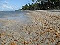 Praia dos Carneiros, entre Alagoas e Pernambuco.jpg