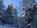 Prat Peyrot - Mont Aigoual (piste ski de fond) 2.jpg