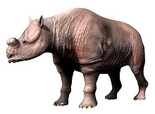 Brontotheriidae - Wikipedia