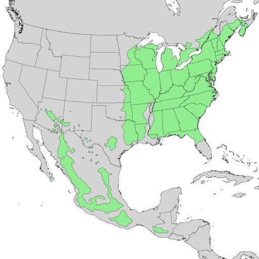 Prunus serotina range map 1