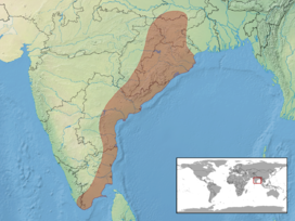Psammophilus dorsalis distribution.png