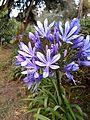 Purple flower1.jpg