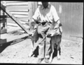 Queensland State Archives 1715 Identical twin Jersey heifer calves October 1952.png