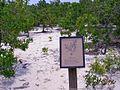 Quercus laevis-1.jpg