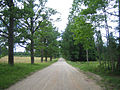 Rõka oak alley.JPG