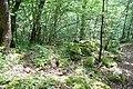 RNR Bois des Roches-5 (36).jpg