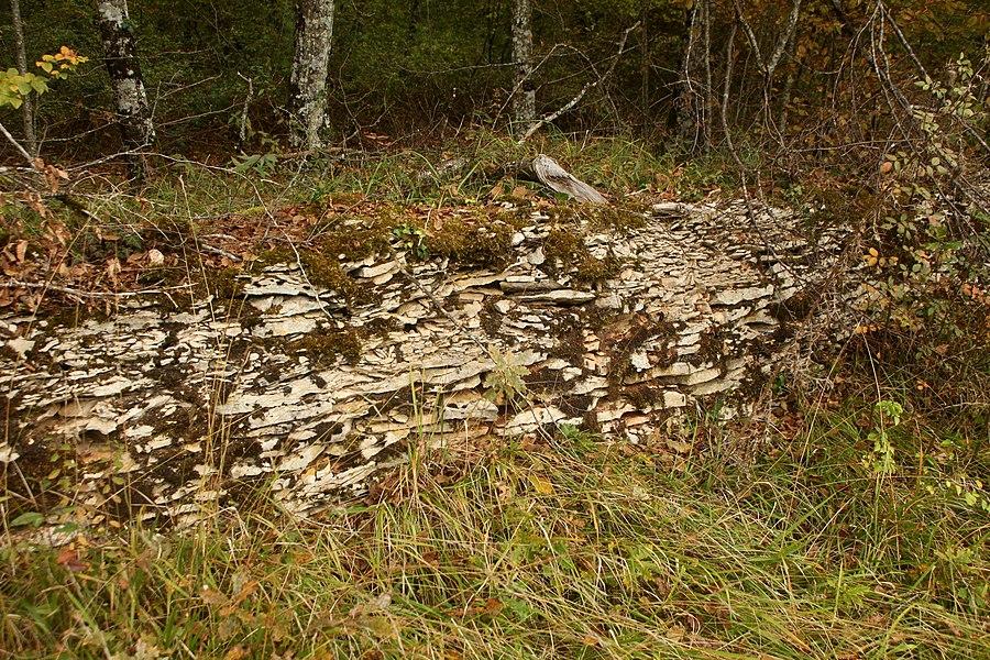 Muret dans la RNR des pelouses et bois de Villemoron (Haute-Marne).