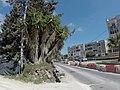 Rabat, Malta - panoramio (406).jpg