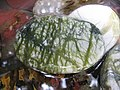 Rain-flower stone(f5811979854).jpg