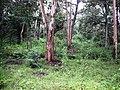 Rajiv Gandhi Tiger Reserve, Nagarhole - panoramio (5).jpg