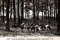 Ramasseurs de châtaignes - Forêt de Meudon.jpg