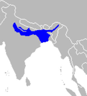 Ganges shark - Image: Range map Ganges shark