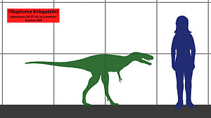 Raptorex - Size of the juvenile specimen compared to a human.