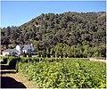 Raspberry Field, Oak Glen, CA 6-23-12a (7449450994).jpg