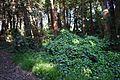 Redwood Memorial Grove 13 2017-06-12.jpg