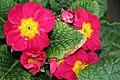 Redyellowflowerweb - West Virginia - ForestWander.jpg