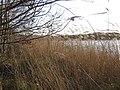 Reedswamp fringing Alderfen Broad, Norfolk - geograph.org.uk - 310681.jpg