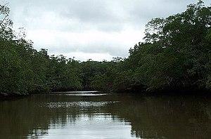 Las Baulas National Marine Park - Image: Rio Matapalo Tamarindo Guanacaste Costa Rica