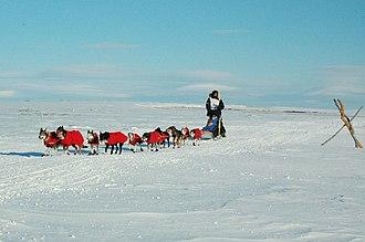 Robert Sørlie - Sørlie nearing Nome in the 2007 Iditarod.