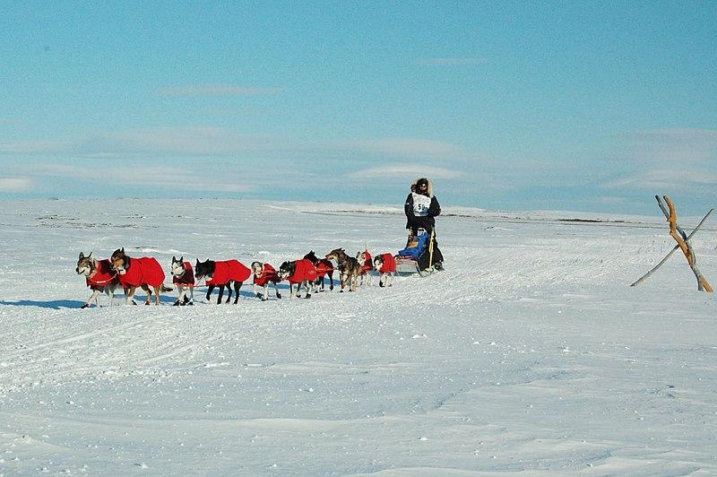 800px Robert Sorlie and Iditarod team near Nome