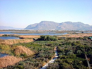 Cape Lowland Freshwater Wetland Vegetation type endemic to the Western Cape, South Africa