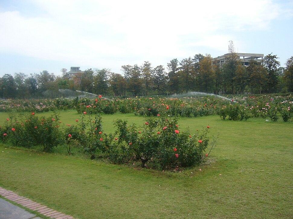 Rose Garden Chandigarh Inida (3)