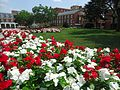 Rutgers University flowers red and white on main campus.jpg