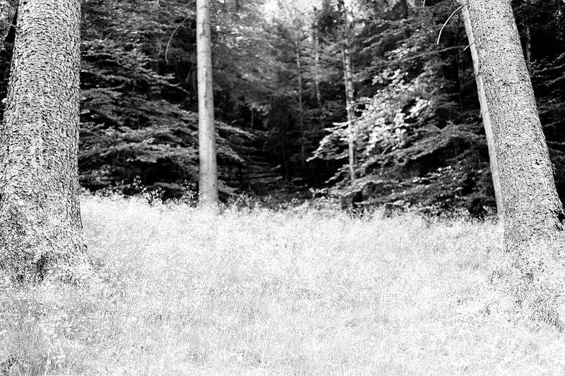 File:Sächsische Schweiz - 08.jpg