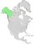 Salix alaxensis range map 0.png
