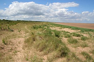 Mablethorpe - Mablethorpe's sand dunes and beach, just past North End