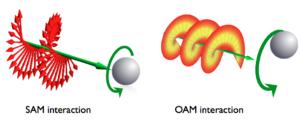 Angular momentum of light - Spin and orbital angular momentum interaction with matter