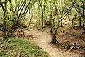 Santoña - trail 5.jpg