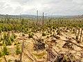 Schachten im bayrischen Wald.jpg