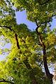 Schnurbäume1.jpg