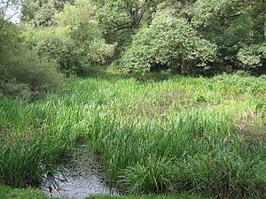 Scratchwood - Overgrown pond at Scratchwood