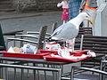 Seagull in Viru McDonalds.JPG